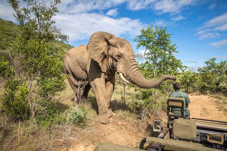 Chinese miners taken to court Over Mining In Zimbabwe's Biggest Game Reserve