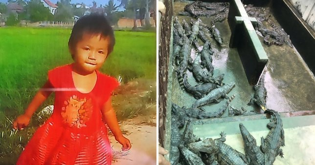 Girl, 2, eaten alive by crocodile