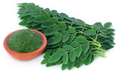 14 health Benefits Of Moringa plant Seeds & leaf